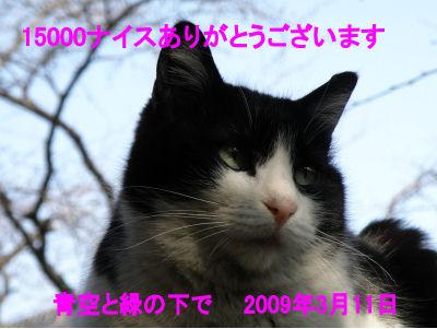 15000_090311-e81f9.jpg